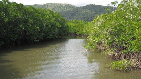 Cairns Harbour Cruises : In the Trinity Inlet - Croc Hunting