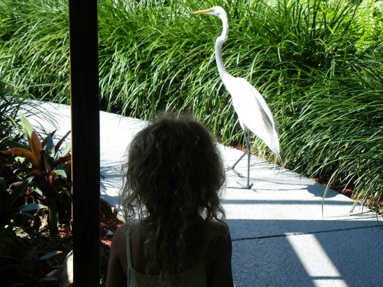 Long Key Beach Resort & Motel: They have a daily friendly visitor
