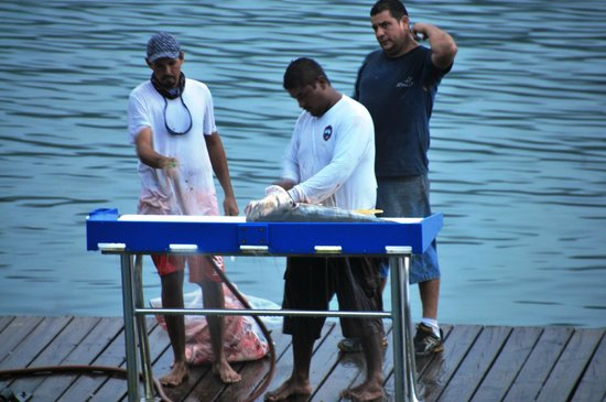 Banana Bay Marina Restaurant: Guys cleaning the day's fishing haul!