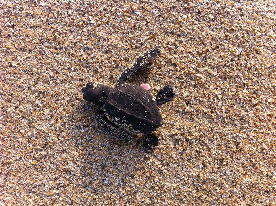 Playa Viva: The cutest turtles ever
