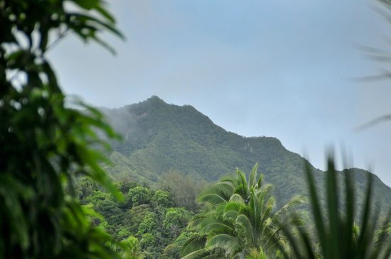 Palm Grove : View out the back deck