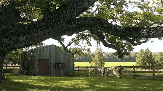 Bannock Burn Bed and Breakfast: Garden Shed amidst old walnut trees