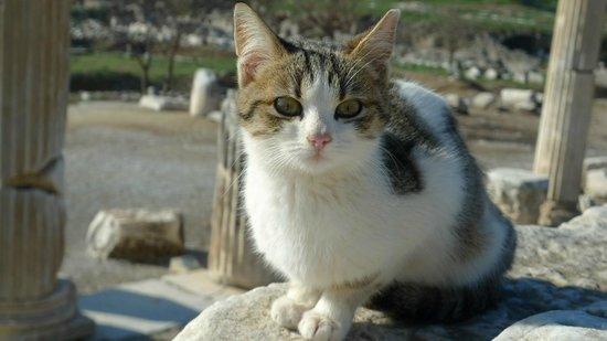 Apasas Tours : Lovely kitten @ Ephesus