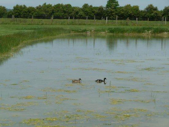 Vieille Ecluse : la marre aux canards