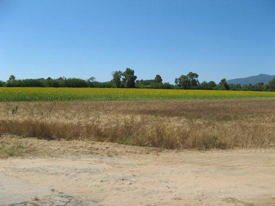 Agriturismo Al Girasole : Sulla strada per arrivare