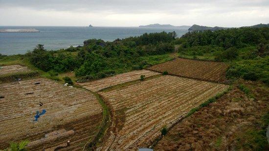 Y Resort Jeju: View towards the sea