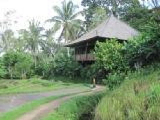 Bali Eco Stay Bungalows: Rice Water bungalow