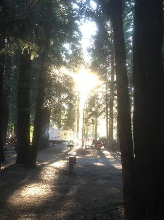 Cisco Grove Campground & RV Park: Cisco Grove Campground