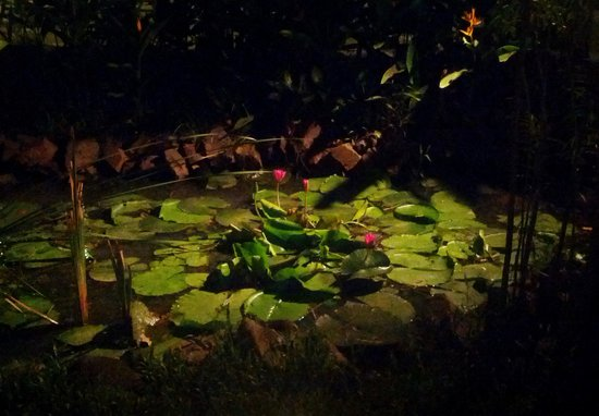 Sheela's : Water lily pond