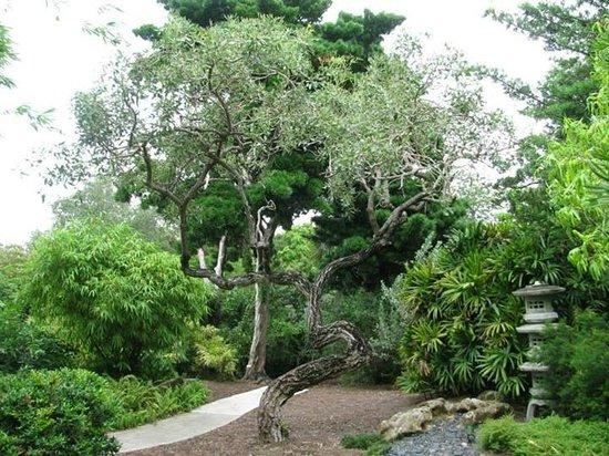 Botanischer Garten - Picture of Miami Beach Botanical Garden, Miami ...