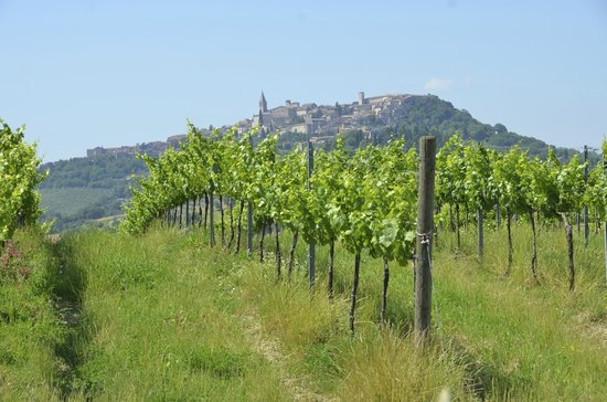 La Palazzetta del Vescovo: Medieval hillside village and vineyard
