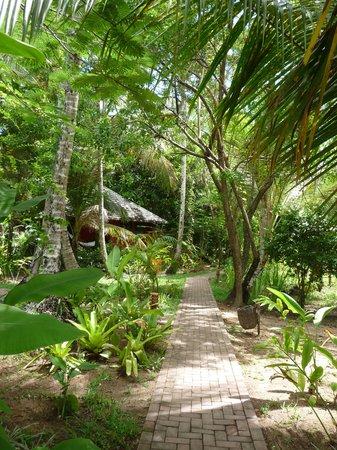 Anima Hotel: Accès au bungalow