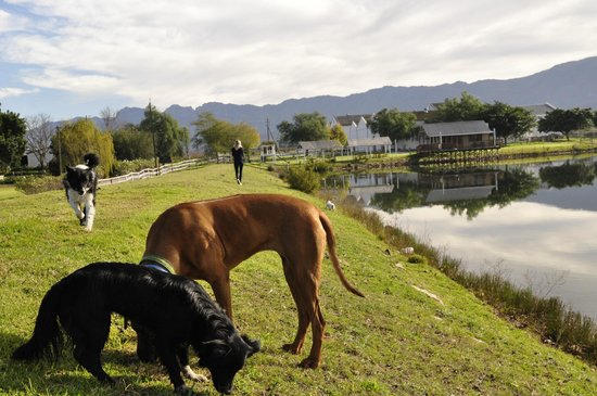 Excelsior Manor Guesthouse: Dogs and the small wine-house
