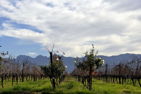 Excelsior Manor Guesthouse: The Vineyards