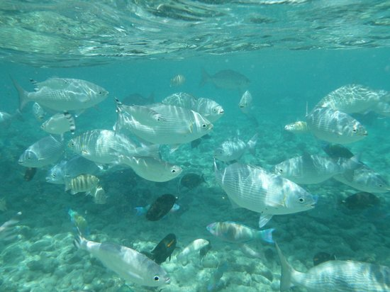 Bokissa Private Island Resort: Fish feeding time.