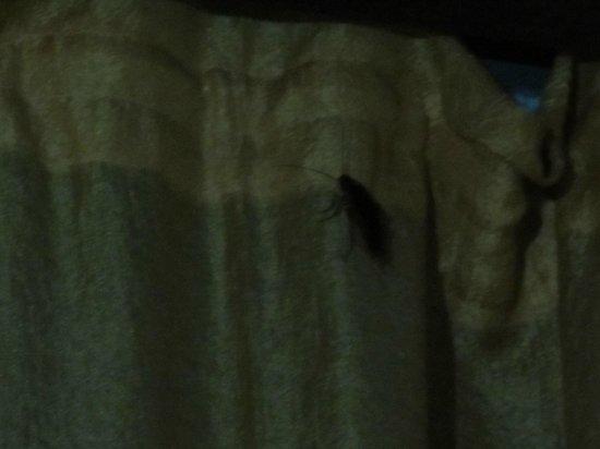 Dar el Yasmine: Monster cockroach