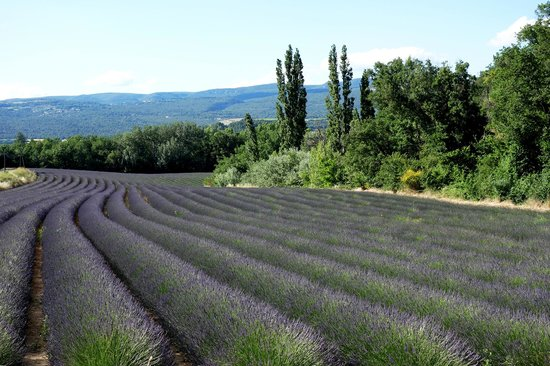 La Violette: Lavande near Avignon