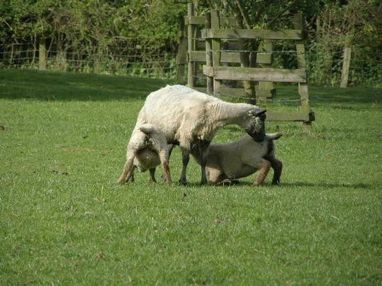 Mill Farm Bed & Breakfast: paddock