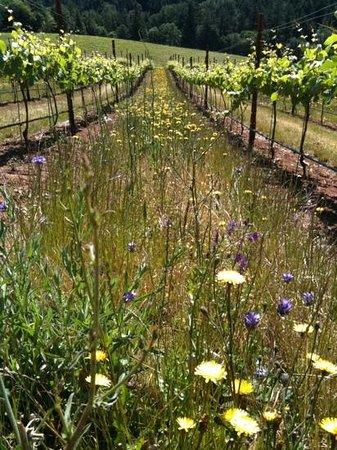 Phelps Creek Vineyards Bild