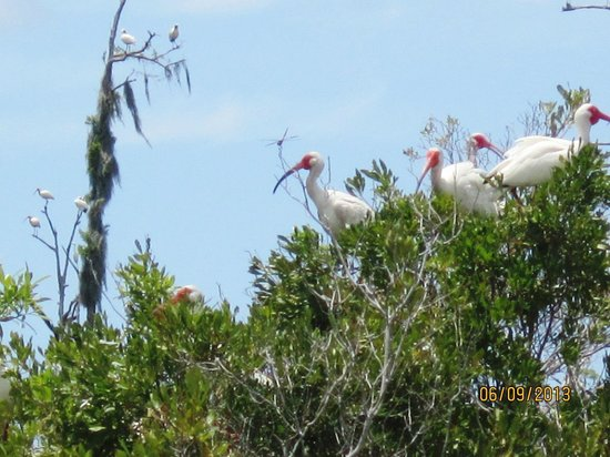 Bayou Black Airboat Swamp Tours : Birds nesting