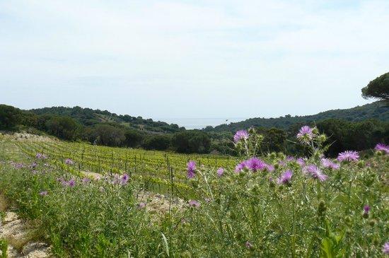 Domaine La Tourraque : les Vignes