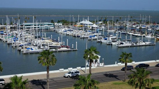 Holiday Inn Corpus Christi Downtown Marina : marina day view