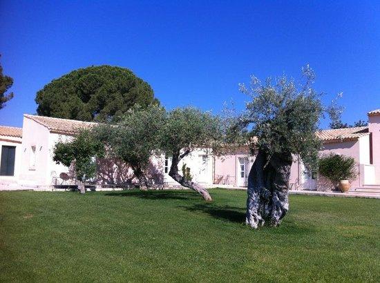 Masseria degli Ulivi: Olive Trees