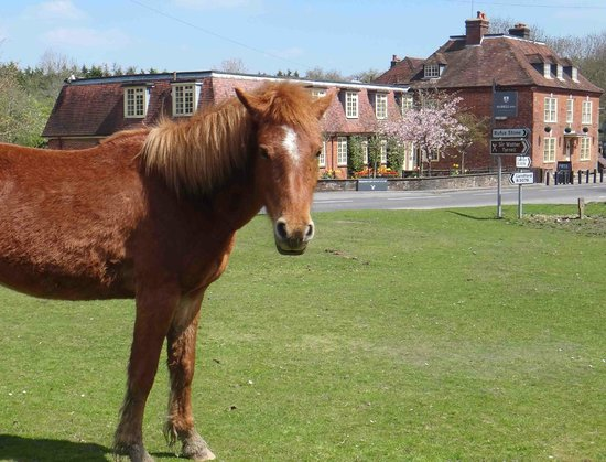 The Bell Inn: Local ponies