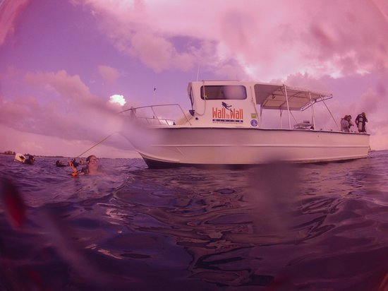 Wall to Wall Diving: dive boat