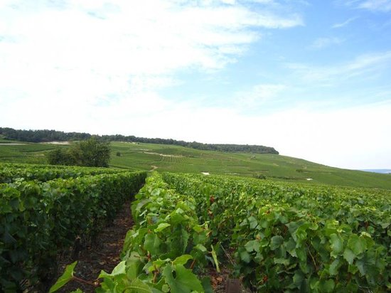 C La Vigne- Authentic Champagne Tour: Vineyard in spring