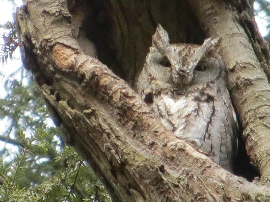 Allegheny Cemetery : An owl looks out on the grounds