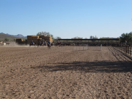 White Stallion Ranch: Team Penning - the most fun you will have ever!