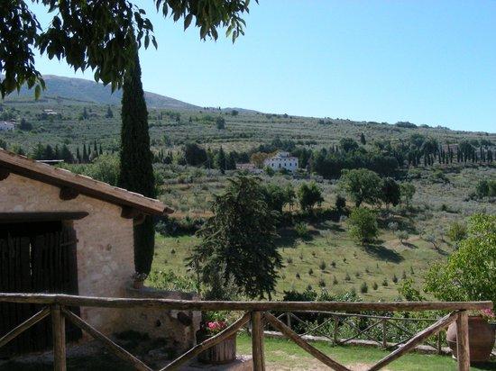 Residenza Paradiso: lo sguardo sugli olivi