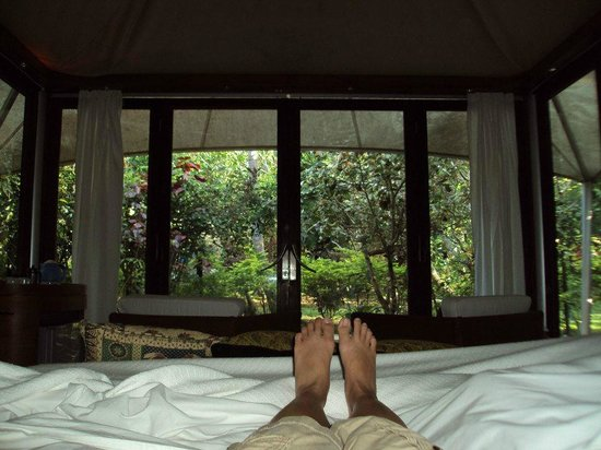 The Fiji Orchid : From the bed in our bure