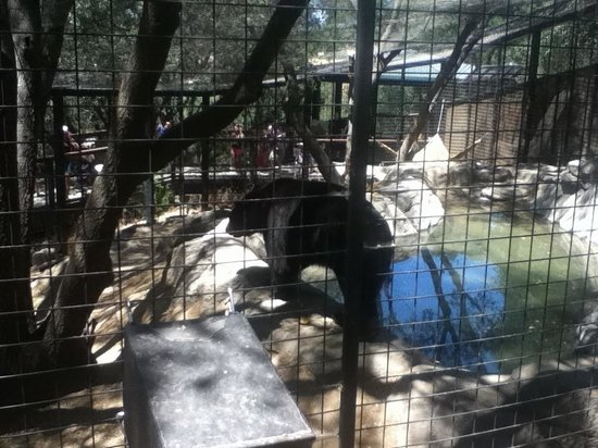 Folsom City Zoo: Henry the bear