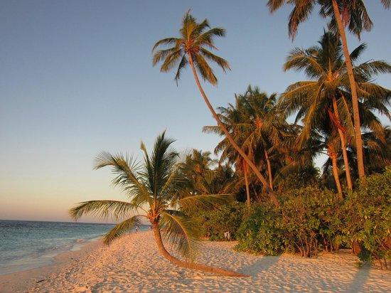 Filitheyo Island Resort: Strand Nord