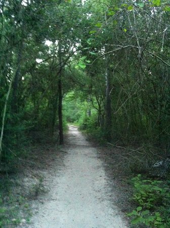 George Mitchell Nature Preserve: End of trail