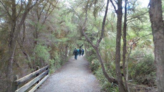 Auckland Zoo: waiotapo