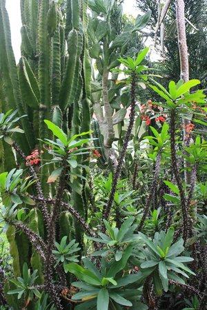 Hotel Bougainvillea: Garden area