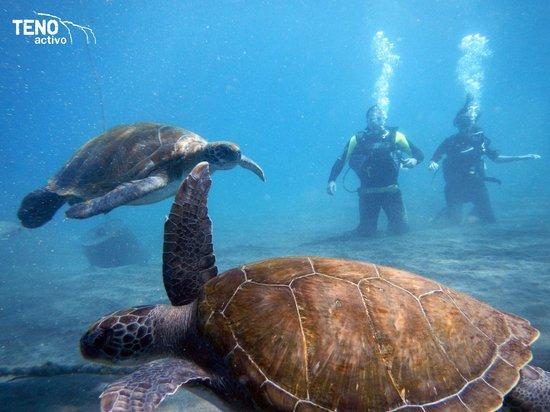Teno Activo: Con 2 tortugas!!!