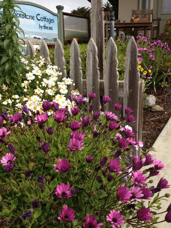Moonstone Cottages : Garden in front of Seascape Cottage