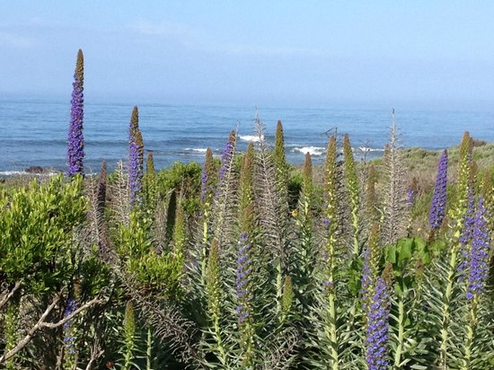 Moonstone Cottages: View across from the cottage (street is just in front of the flowers)