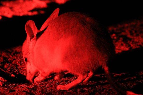 Barna Mia Nocturnal Wildlife Experience