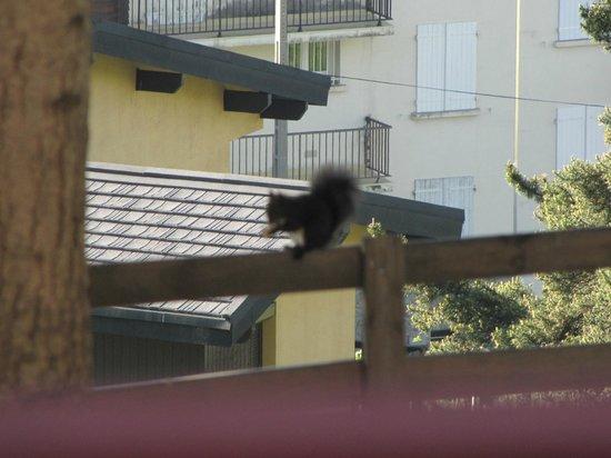 La Cerdagniere : écureuil mangeant les noisettes
