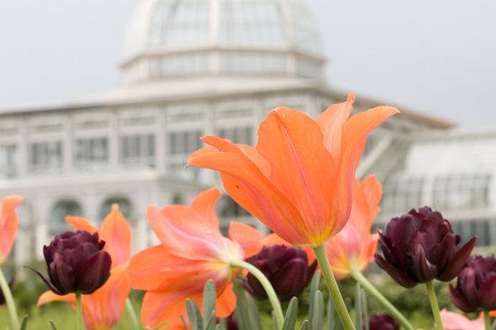 Richmond, VA: Lewis Ginter Botanical Garden