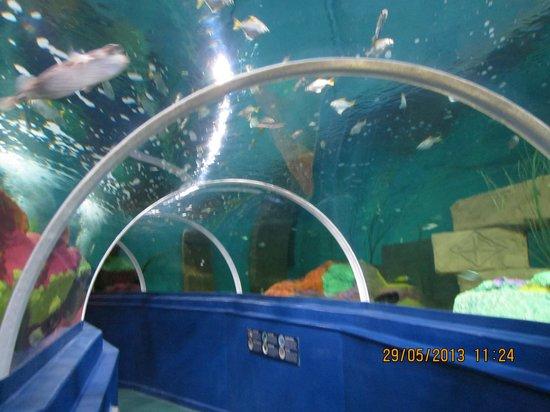 Blue Reef Aquarium: underwater tunnel