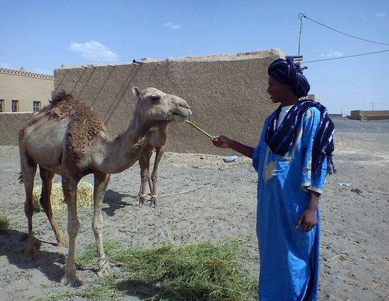 Dar Duna: Camel trekking