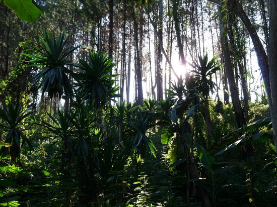 Zomba Forest Lodge: Forest trails