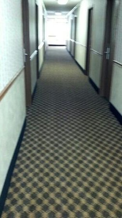 Quality Inn: New carpet!