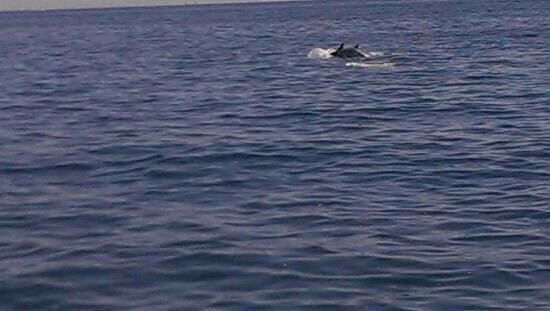 Vente a Navegar: delfines!!